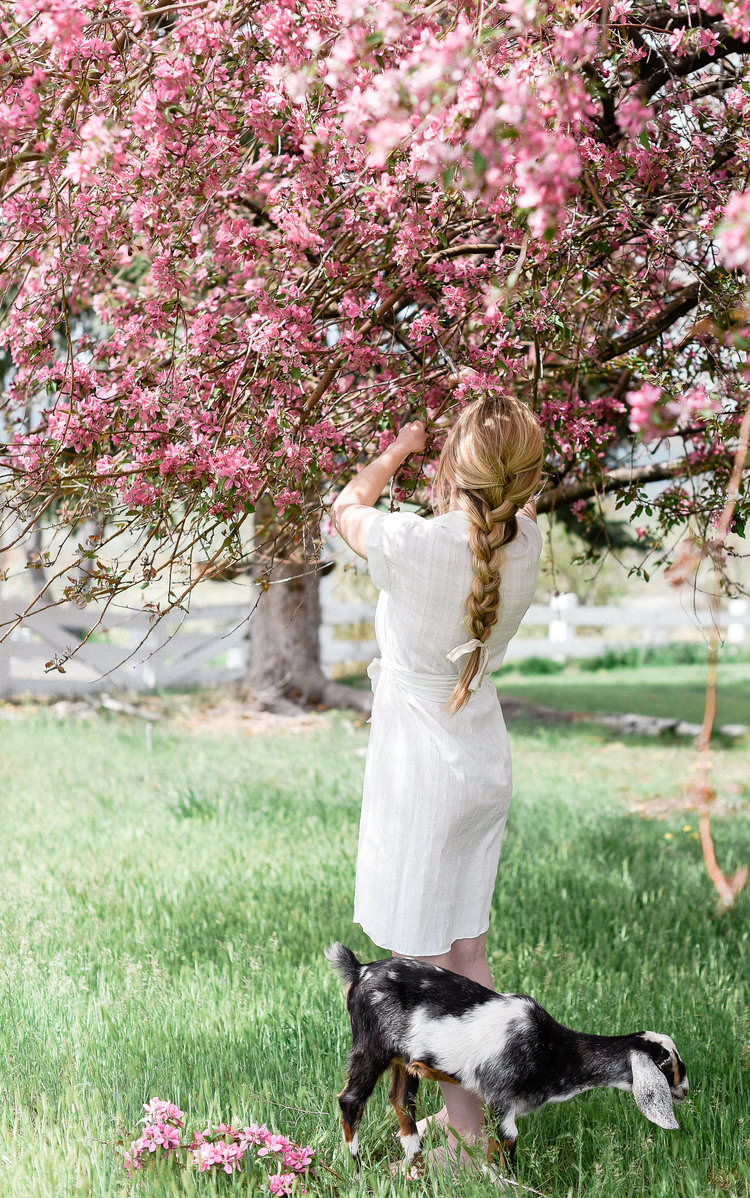 Farmhouse living spring flowering branches with baby goats | boxwoodavenue.com