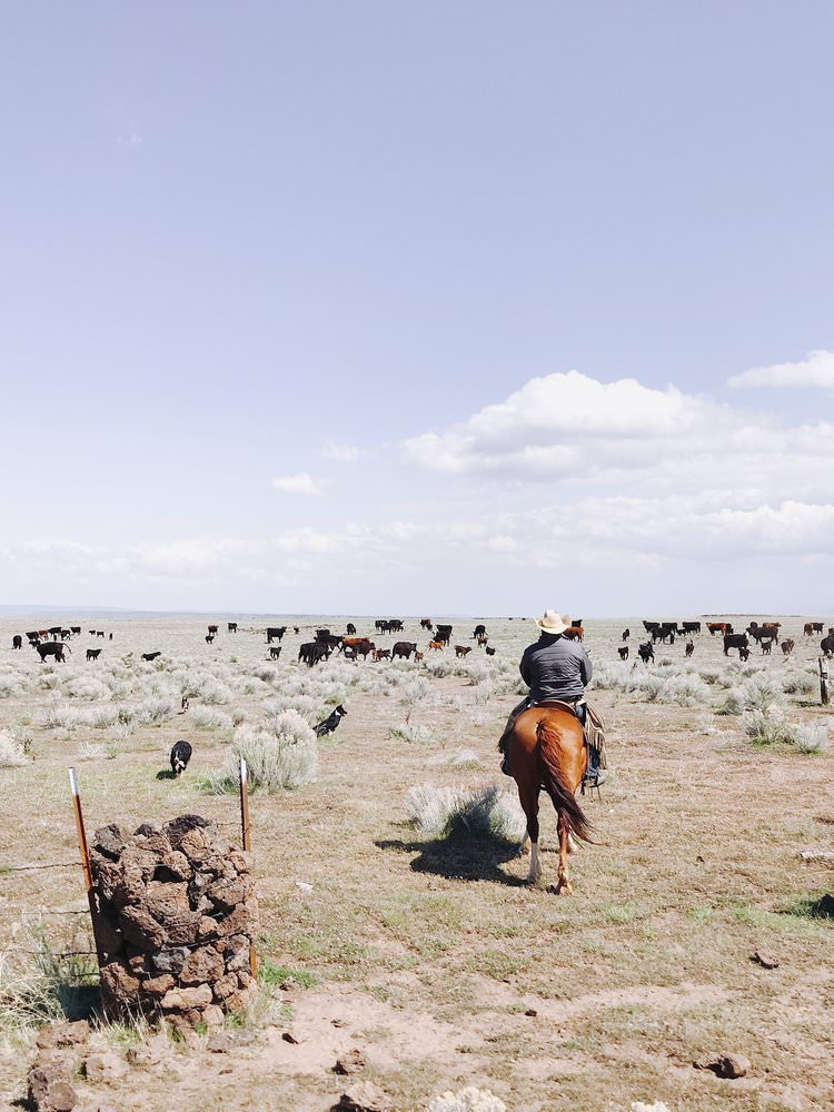 Cattle Ranch Northern California | boxwoodavenue.com
