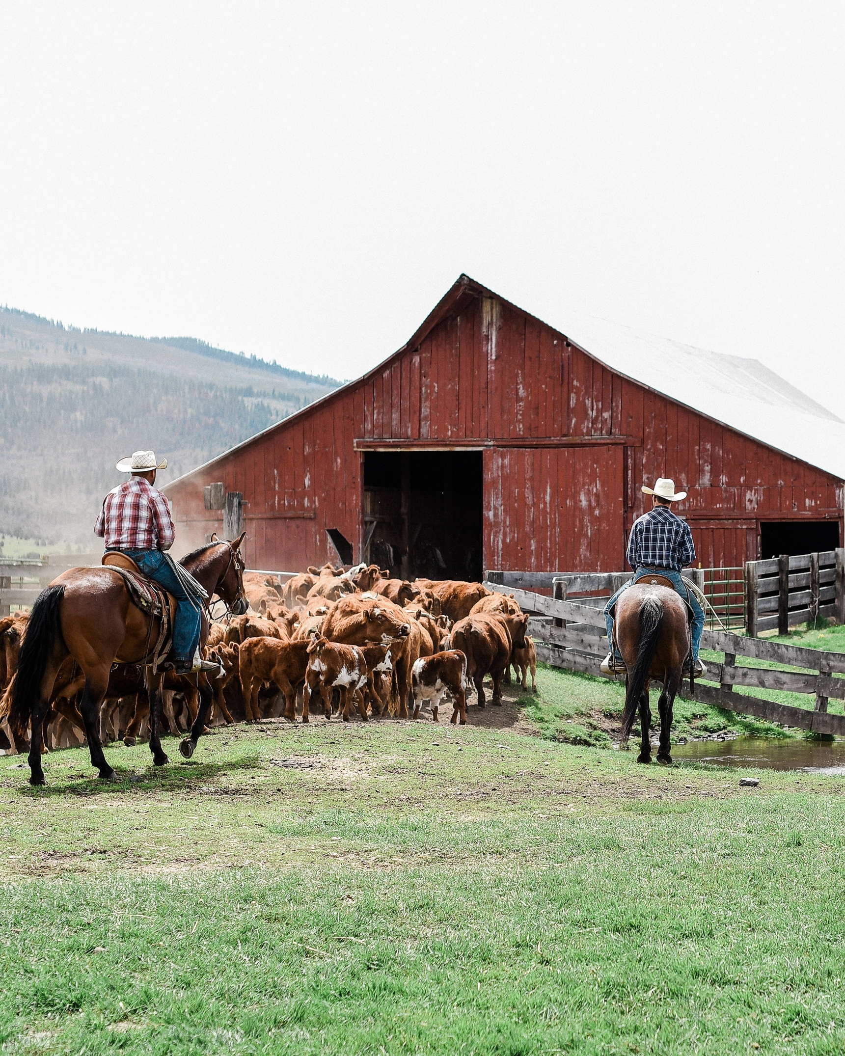 Read our story - Read about our story on the ranch, the history of the land and about our journey in Northern CA.