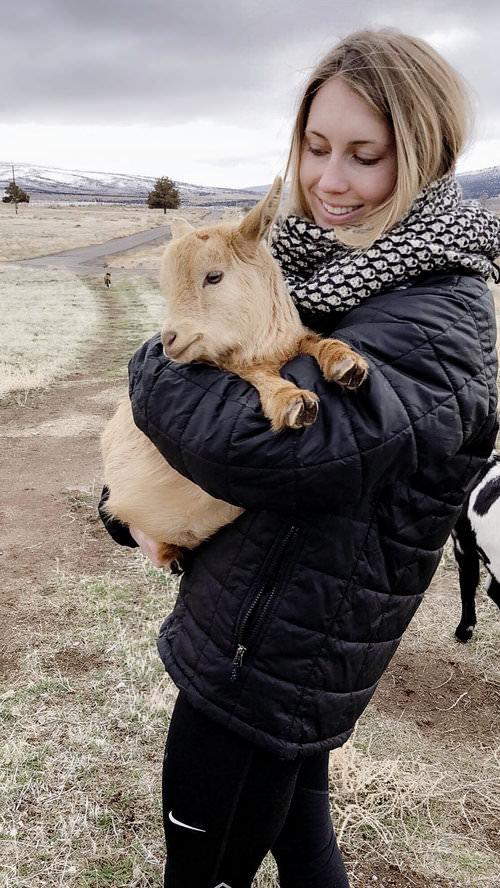 Pygmy Goat \ boxwoodavenue.com