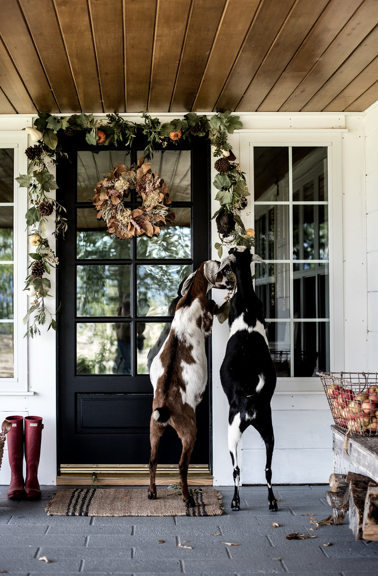 More Porch Ideas - see last year's porch featuring elderberry & buckwheat