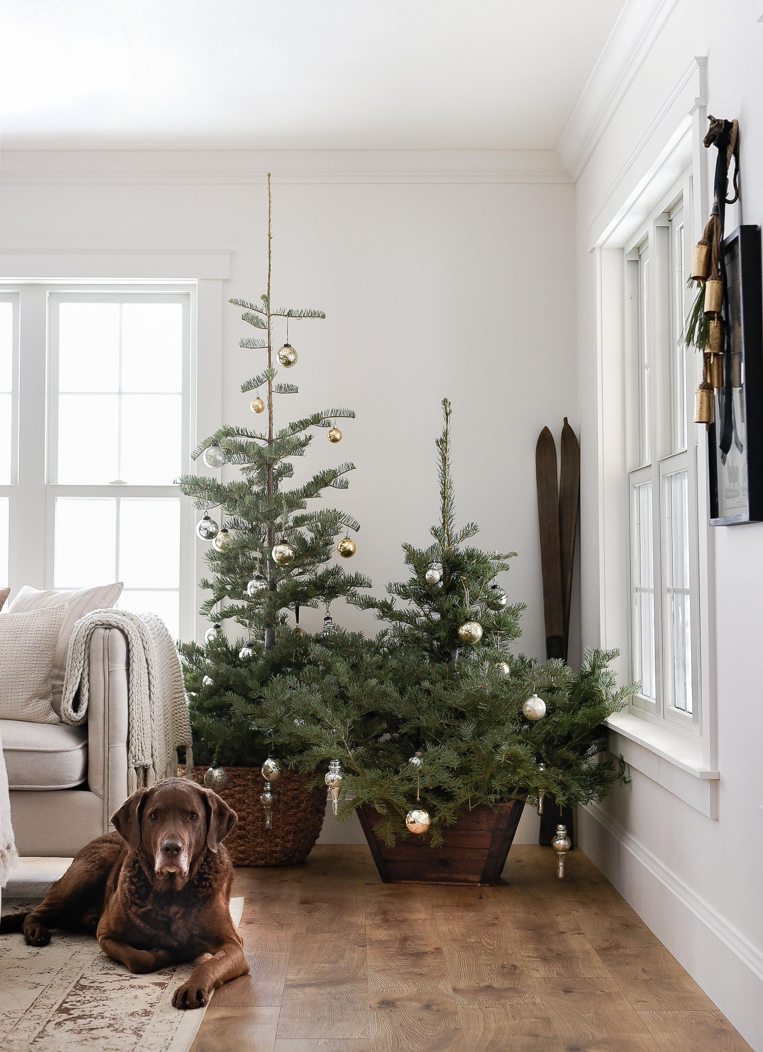 farmhouse christmas ideas from boxwood avenue