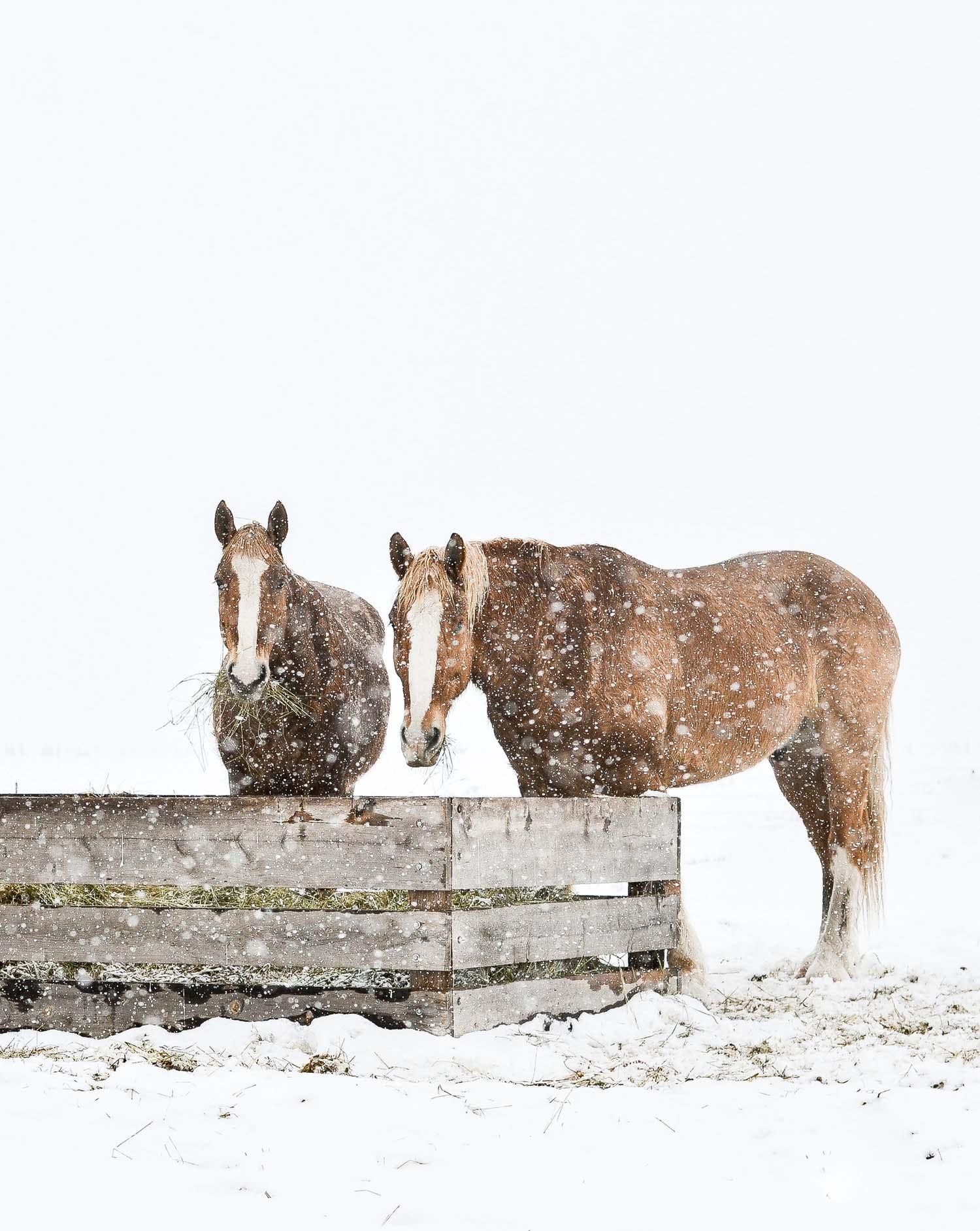 Winter Horse Print