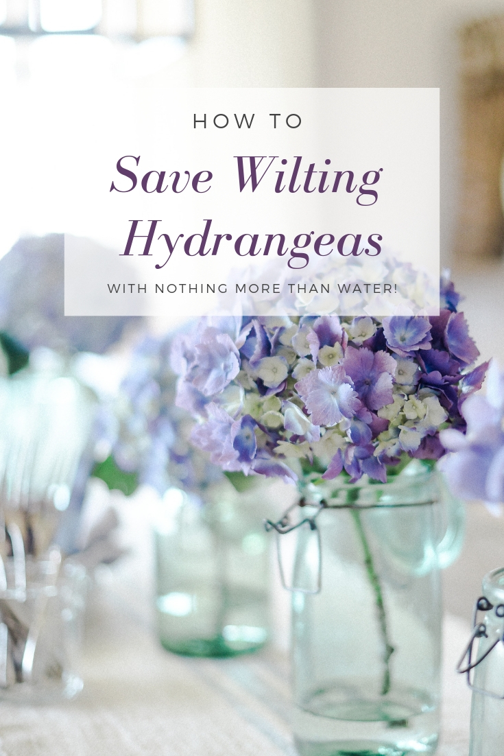 Learn how to rescue a hydrangea if it starts to wilt! It just takes water and time - click here to get the steps! boxwoodavenue.com