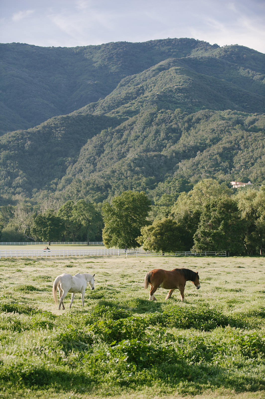 Gorgeous green field with horses in southern California rolling hills and white fence. Beautiful farm property!