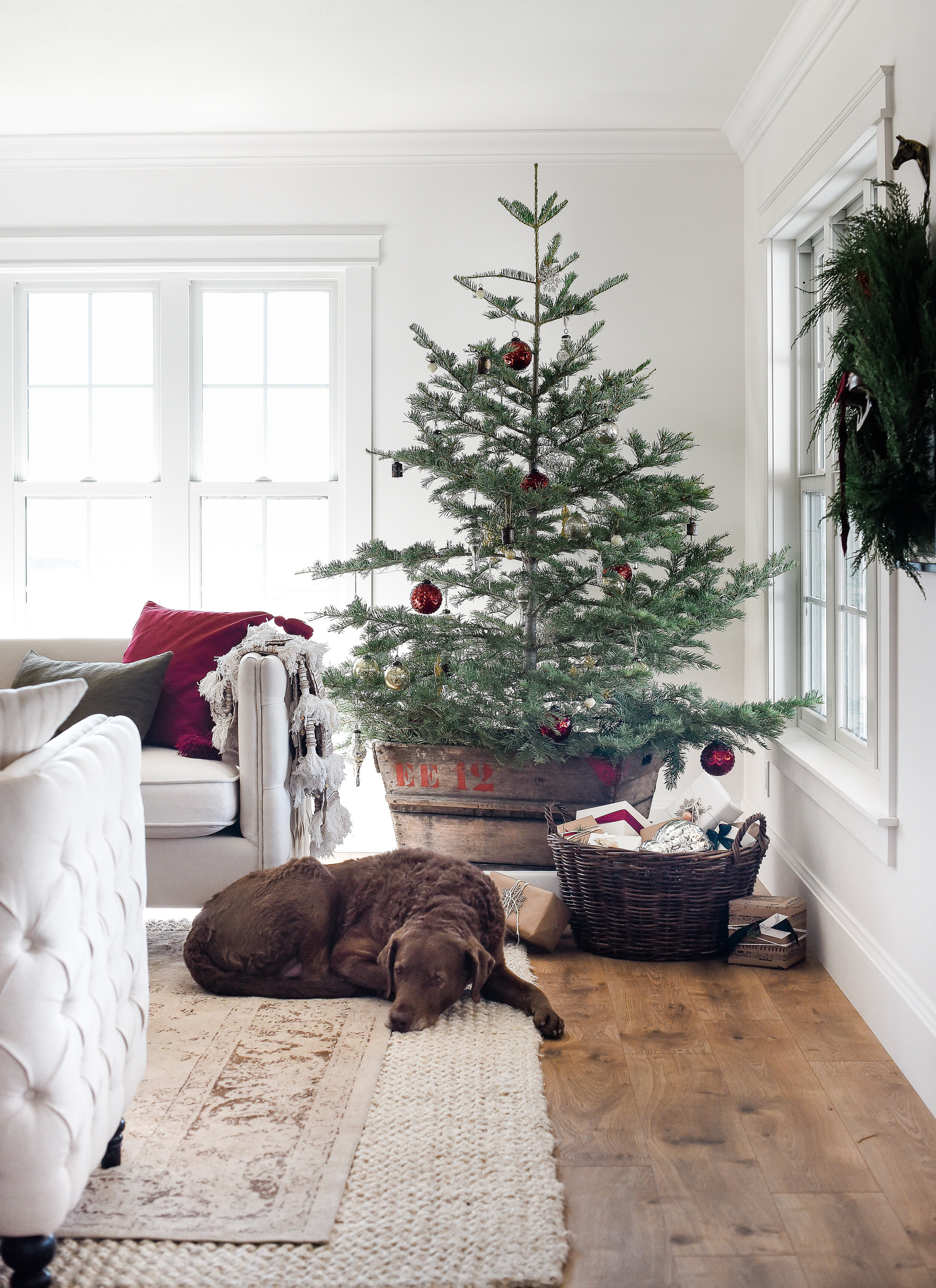 4 Proven Ways To Keep Your Christmas Tree Fresh Through December Boxwood Ave