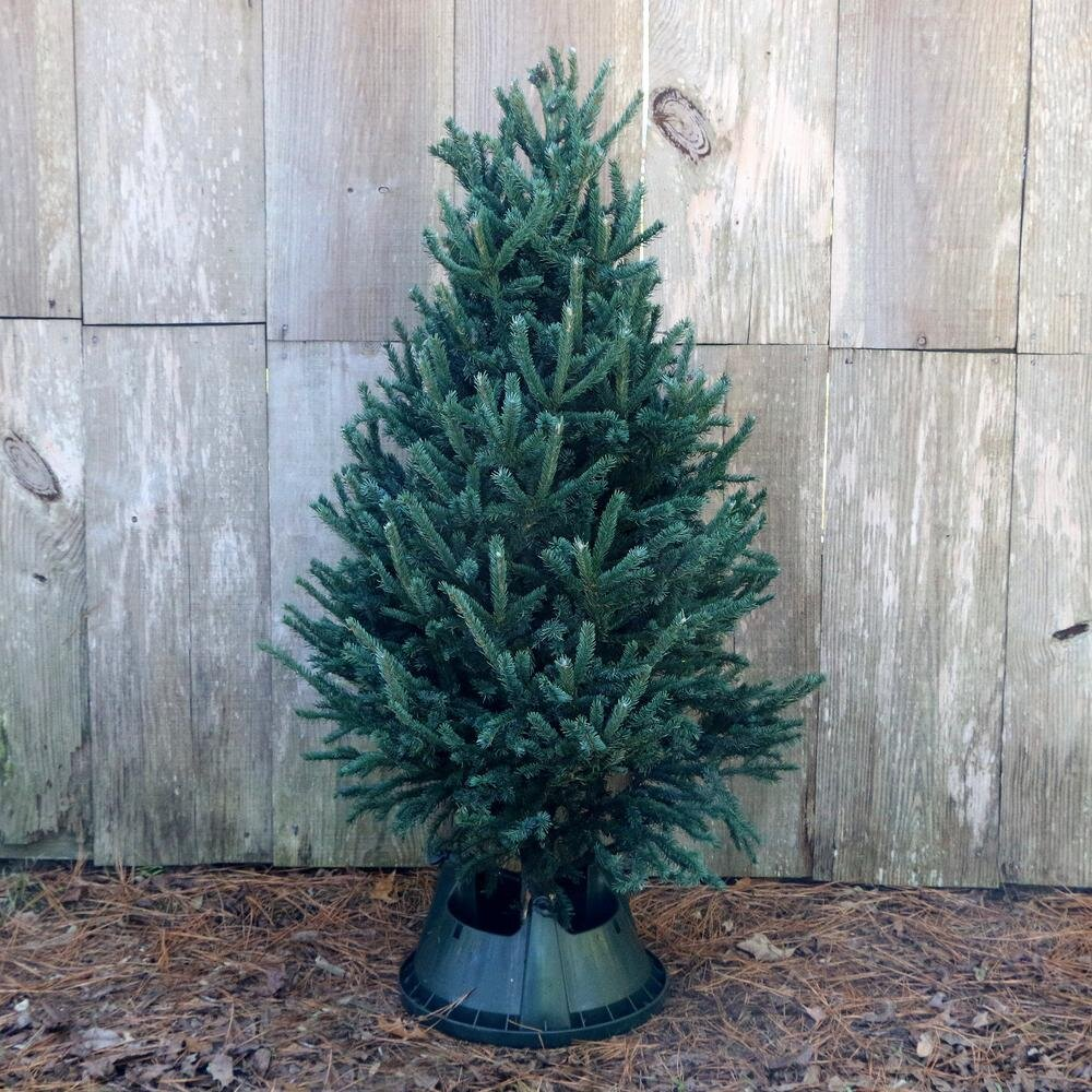 Extreme Christmas Trees: Your Ultimate Guide To Selecting The BEST Real Christmas
