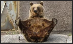 BURLESQUE BEAR JUST DOESN'T CARE!