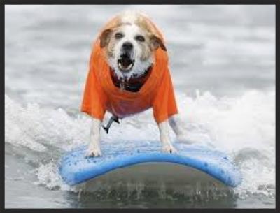 Beach Boys surf dog