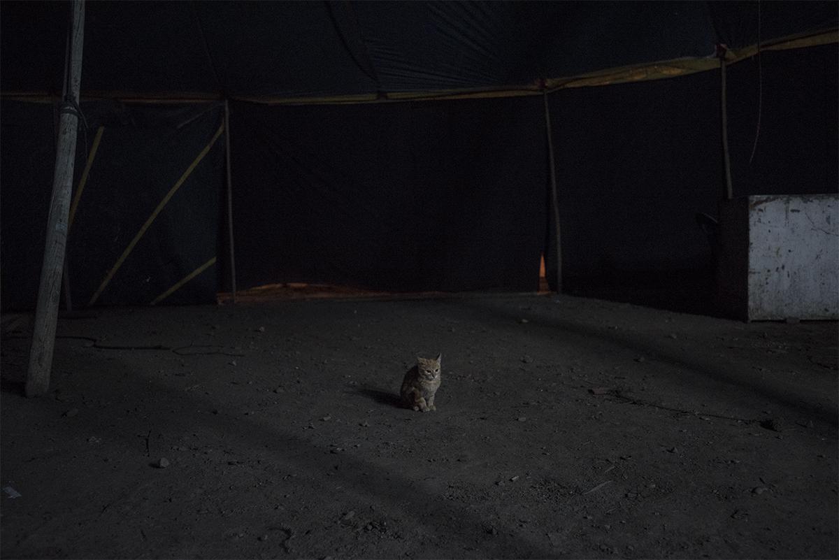 Andromeda_17.jpg