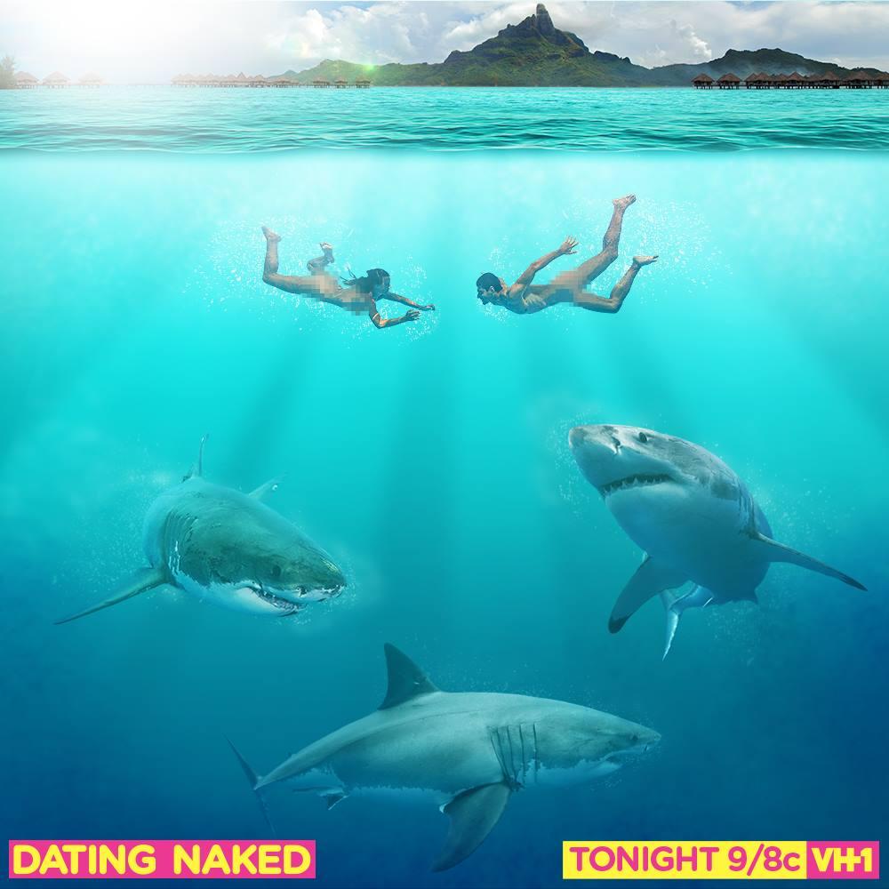 VH1_shark.jpeg