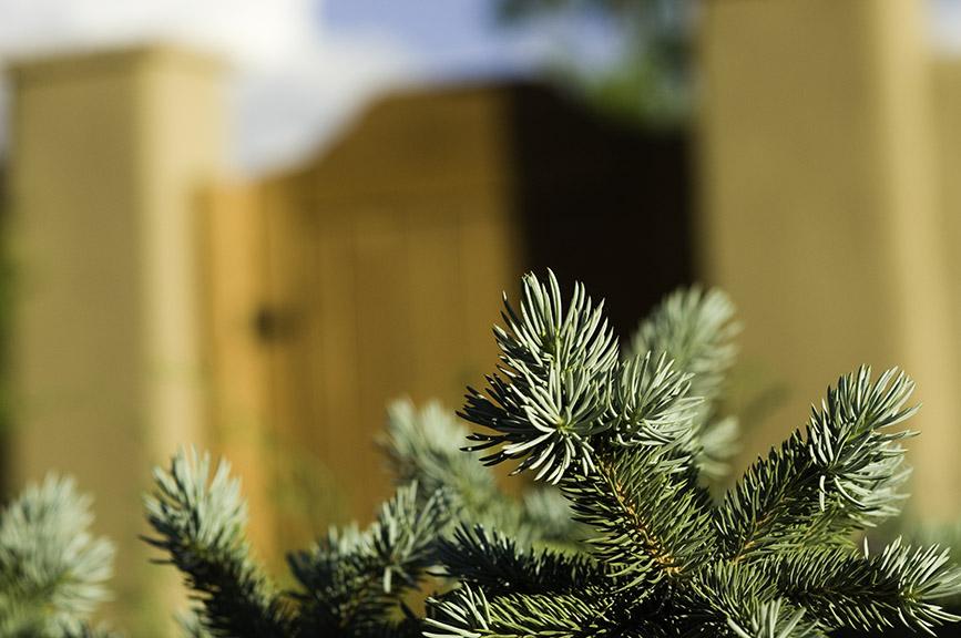 Evergreen Detail