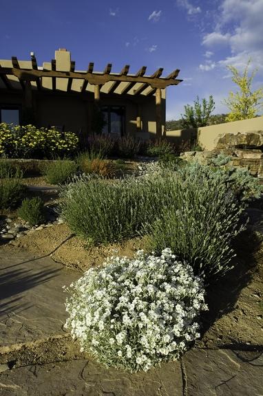Backyard softscape design
