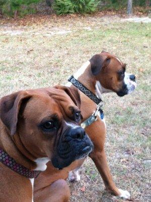 Belle & Rocky