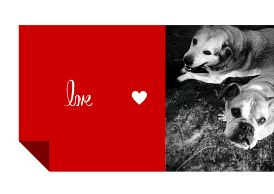 from all of us atBarking Dog Creations copy.png