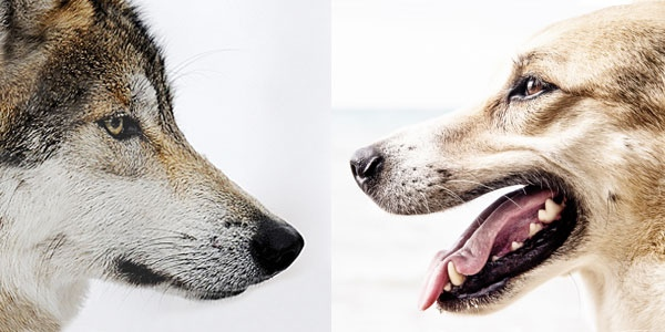 wolfanddog.jpg