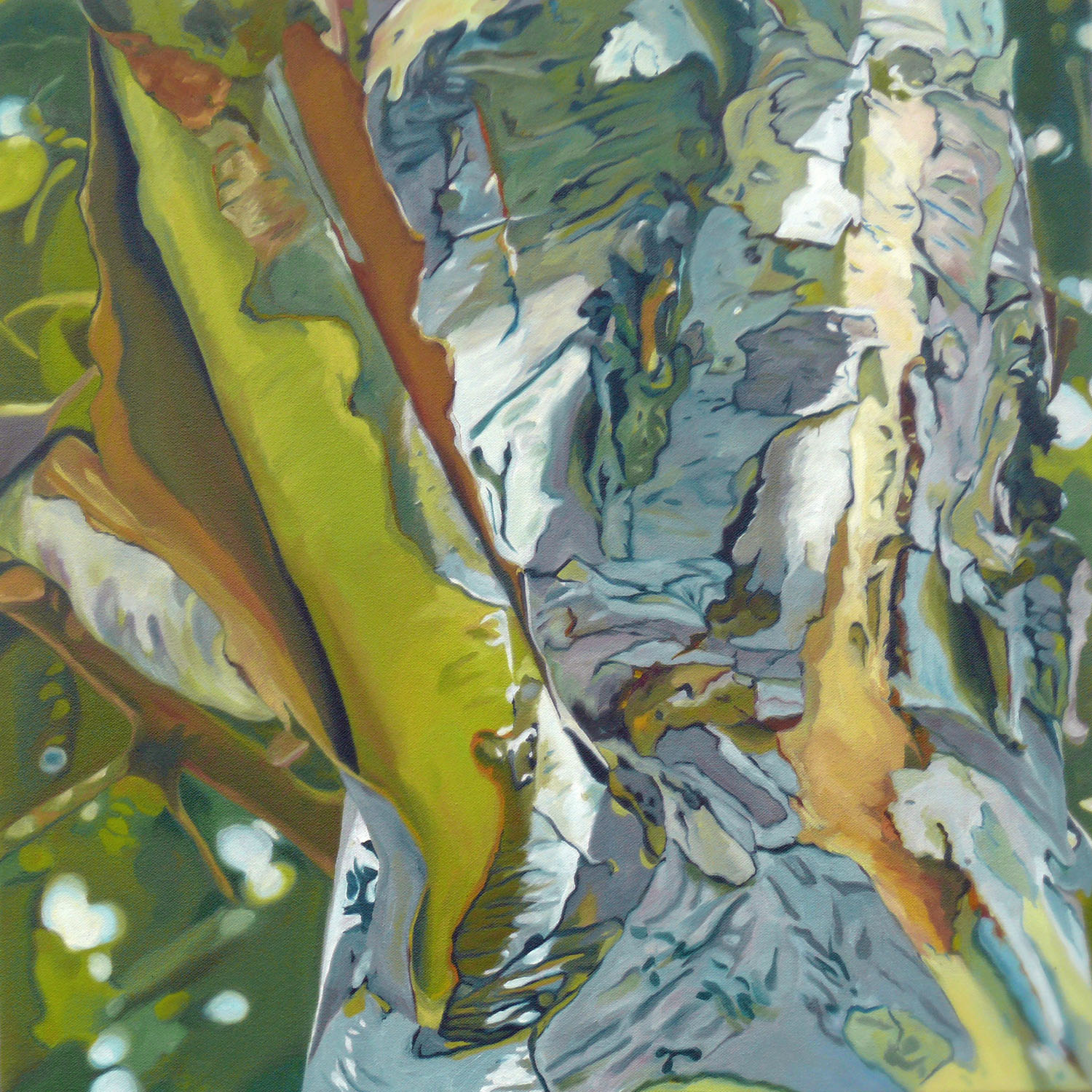 """Summer Sycamore no 5, oil on gallery wrapped canvas, 24X24"""""""