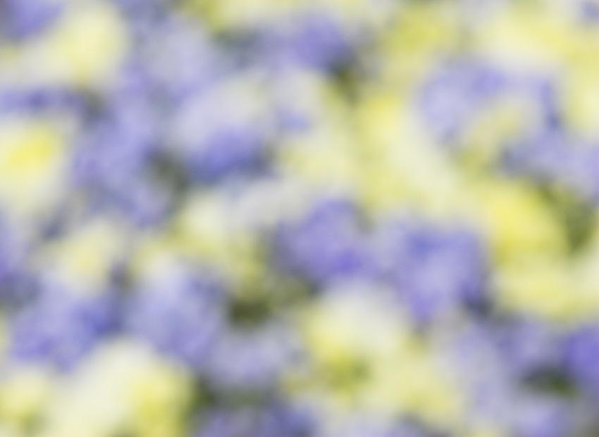 070421_DSC0034-abstract.jpg