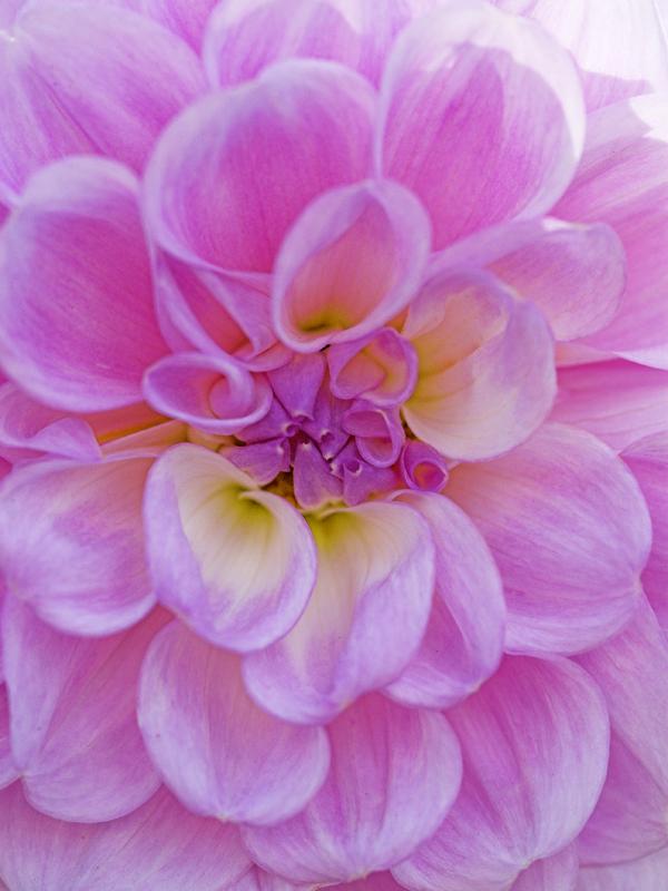 061006_13DSC0078-Pink-blue-.jpg