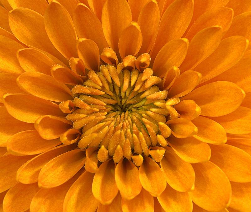 061112_DSC0030-orange-flowe.jpg