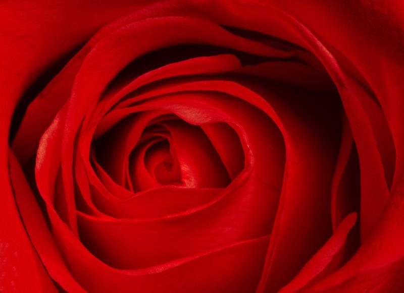 061126_DSC0005-red-rose.jpg