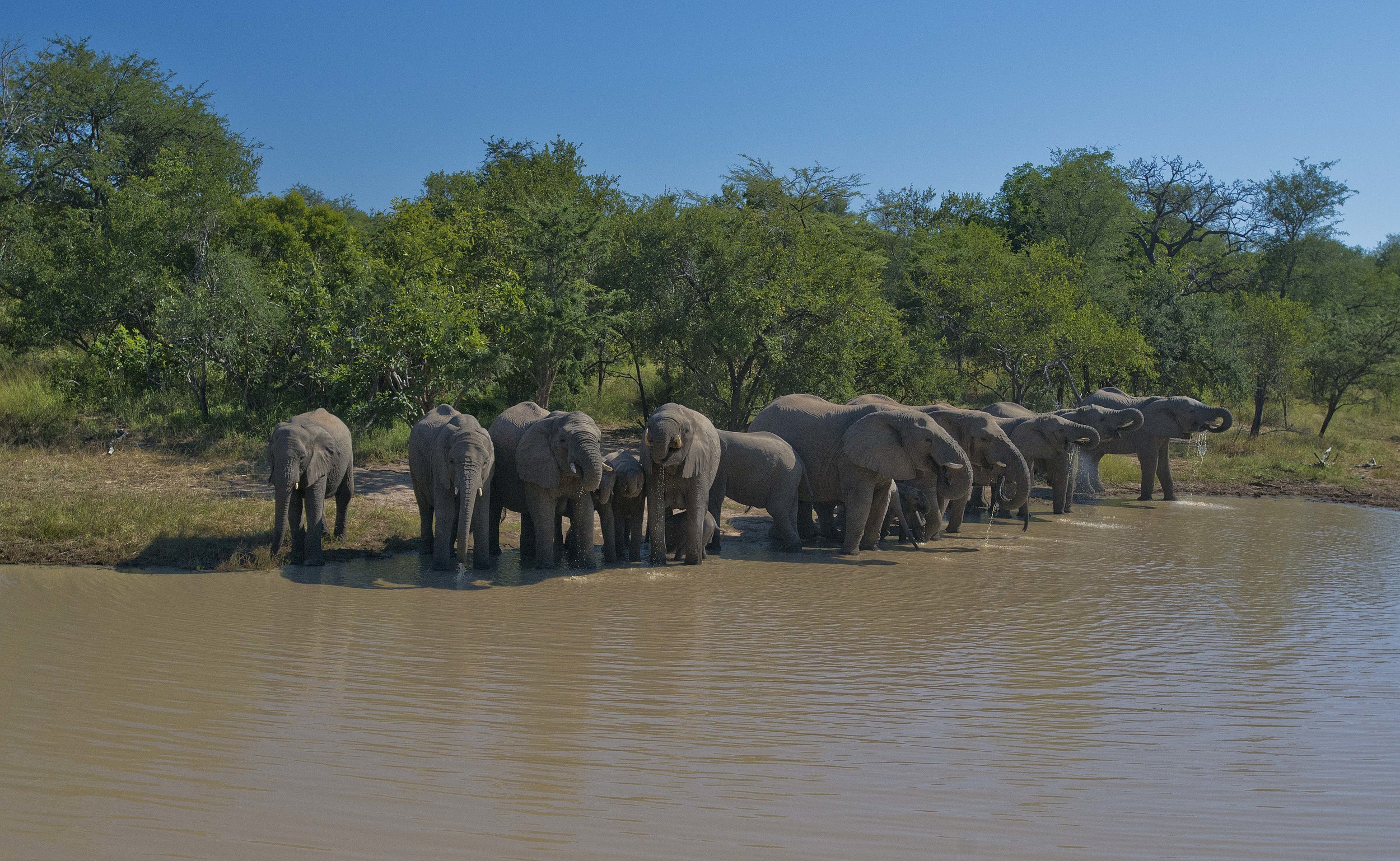 130420_DSC3290 Elephant Herd at the Watering Hole.jpg