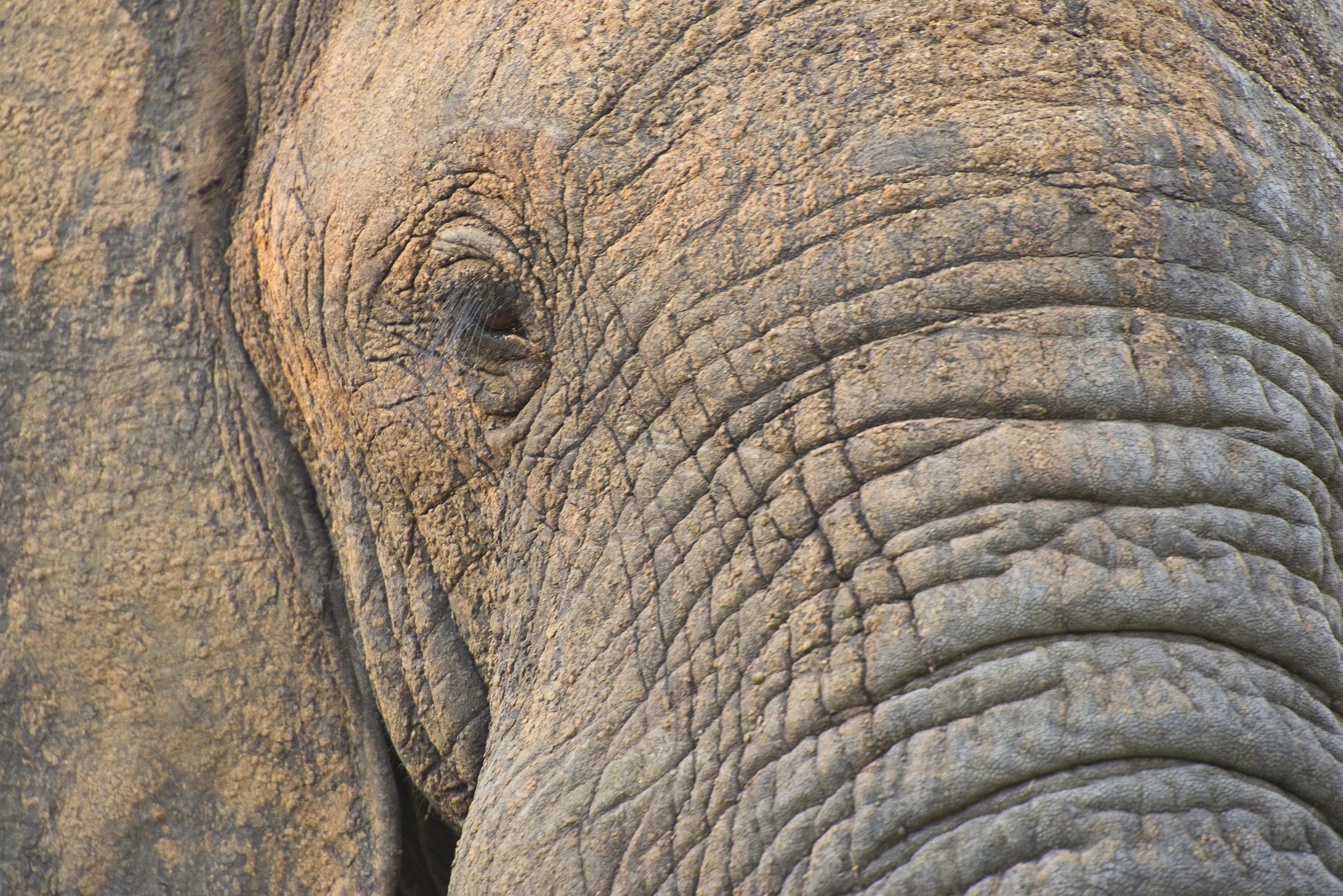 130420_DSC3389 Elephant.jpg