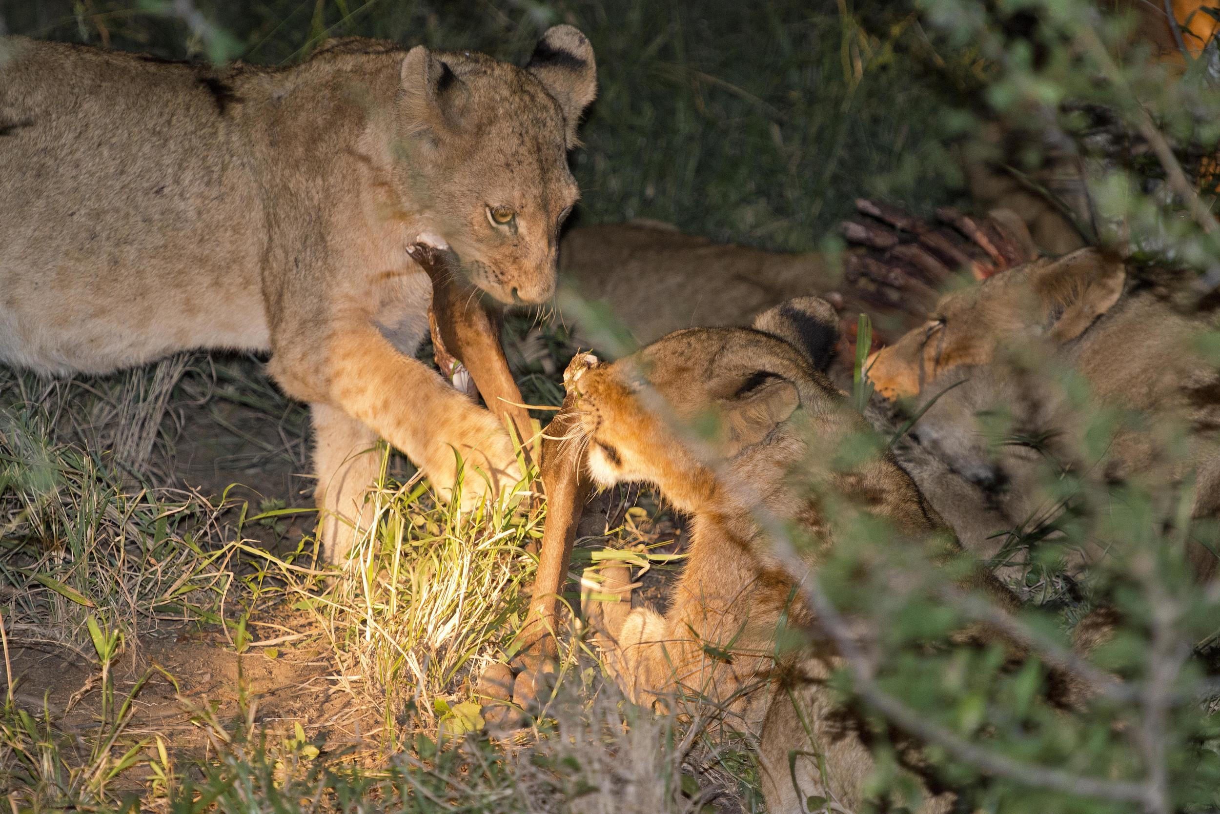 130420_DSC3484 The Lion Pride at Dinner.jpg