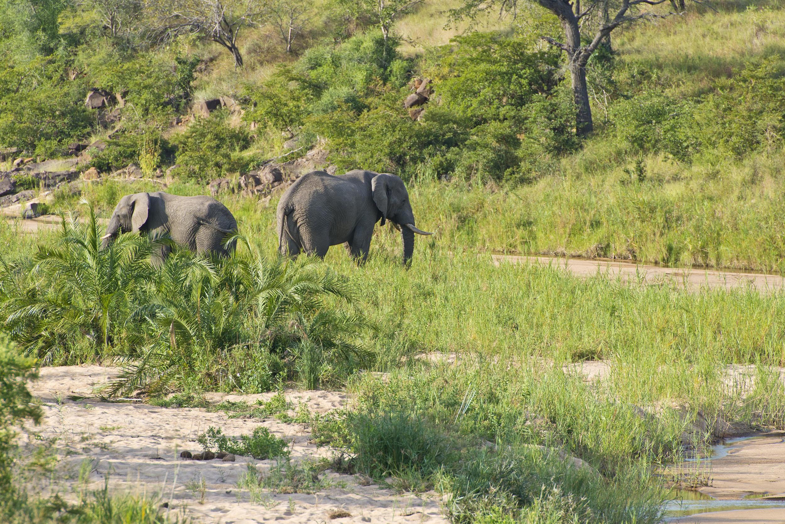 130420_DSC4108 Elephants in Creek Bed.jpg