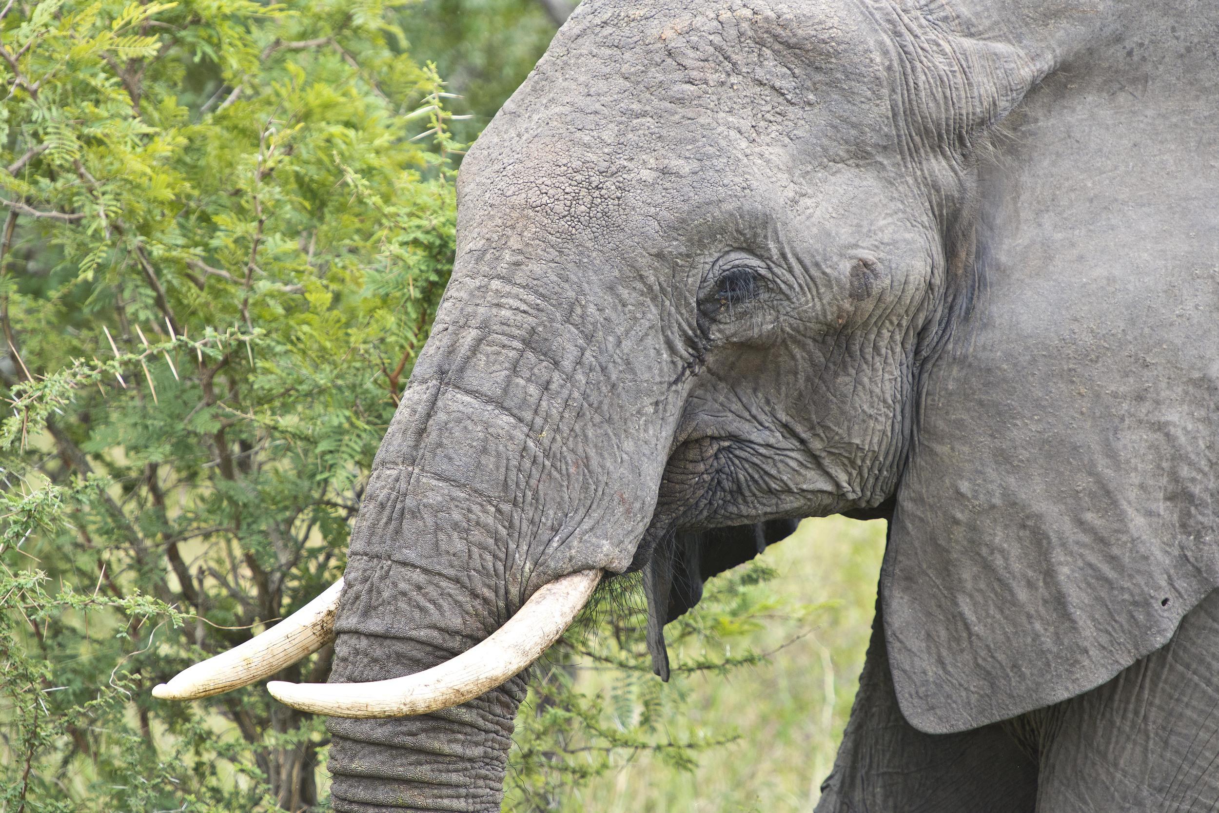 130420_DSC4474 Elephant.jpg