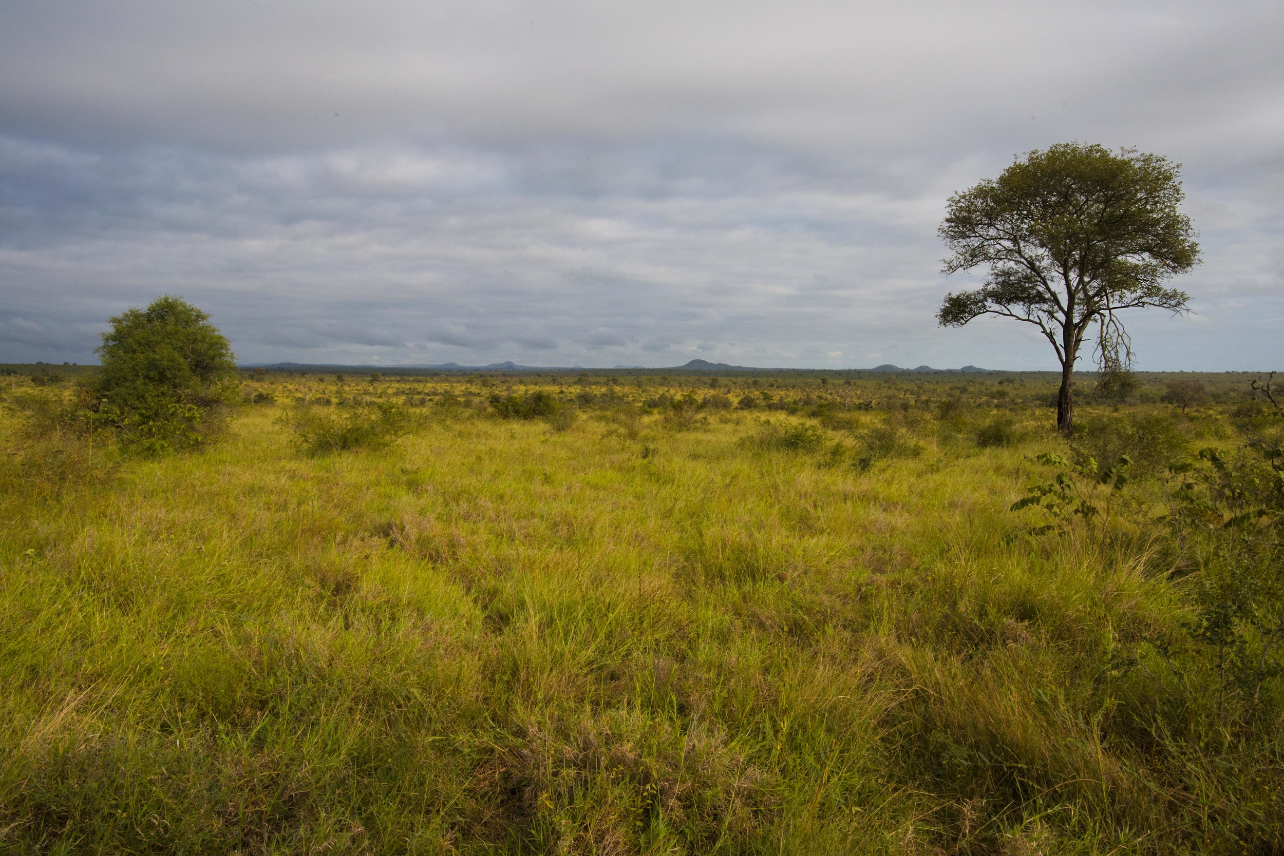 130420_DSC4416 African Bush.jpg