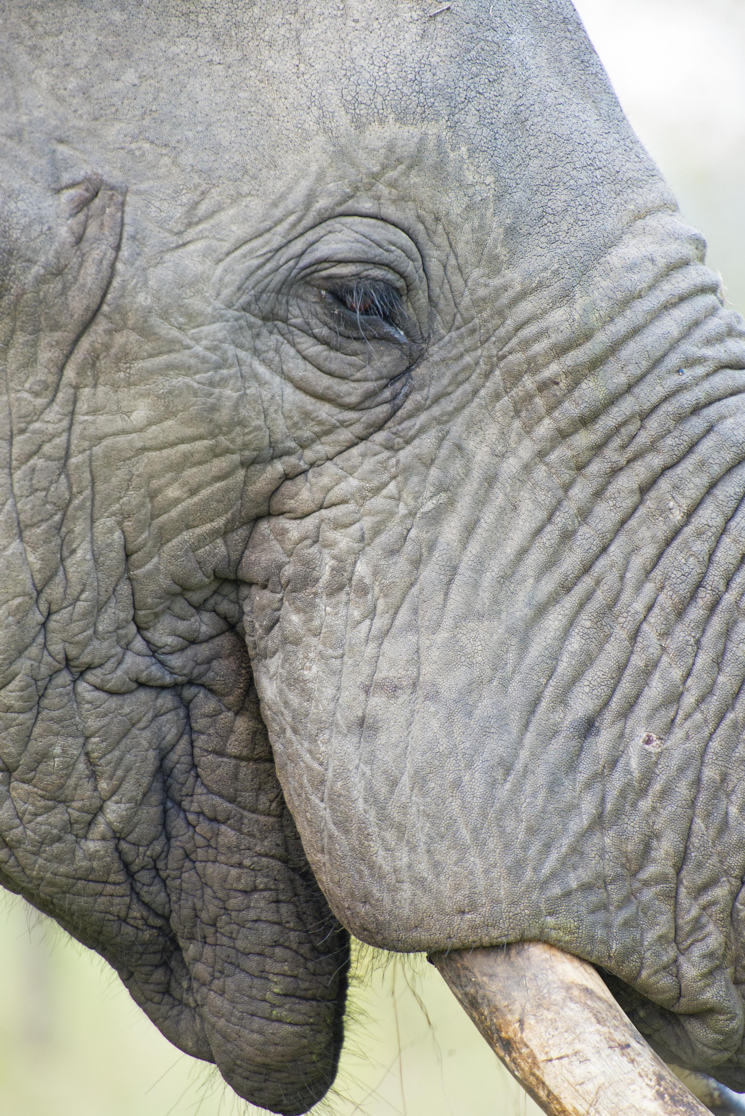 130420_DSC4521 Remarkable Elephant Portrait.jpg