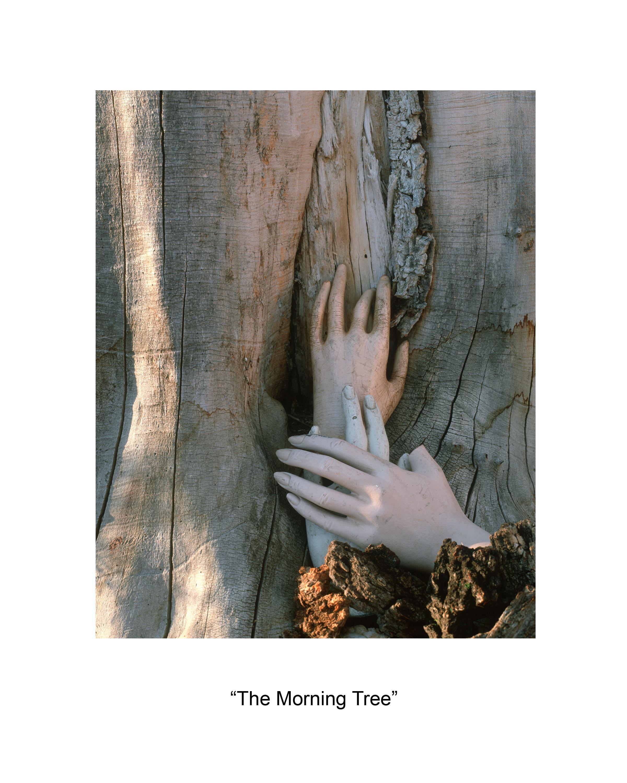 18 the morning tree.jpg