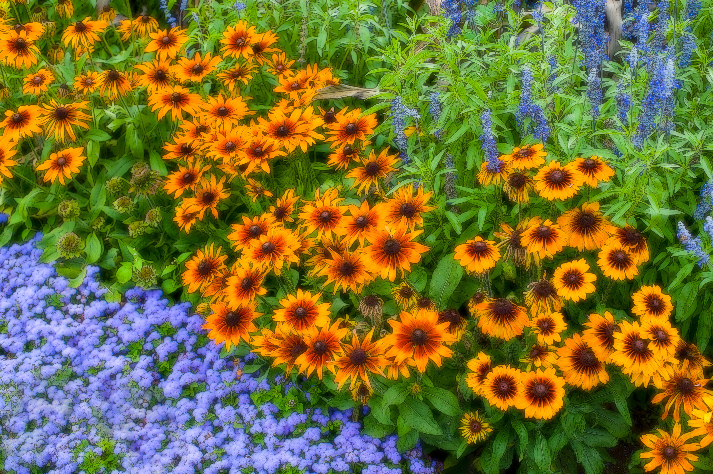 11-910 Fall flower garden_DSC1384.jpg