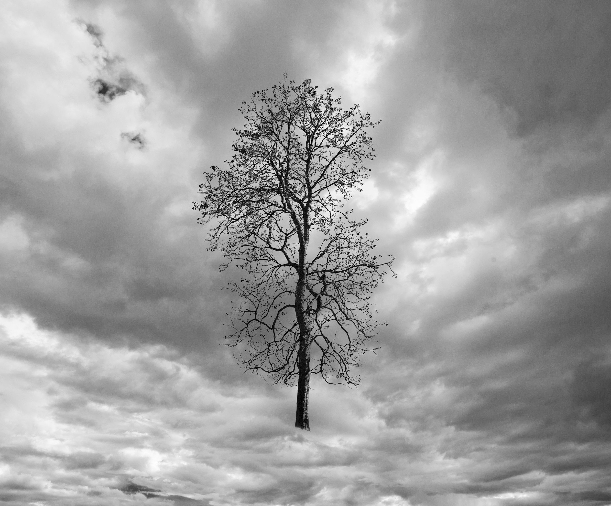 Tree in Clouds