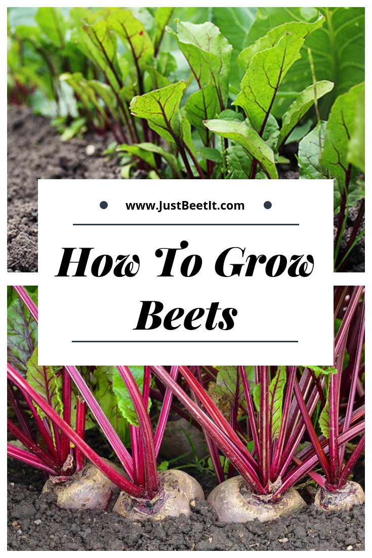 How to Grow Beets.jpg