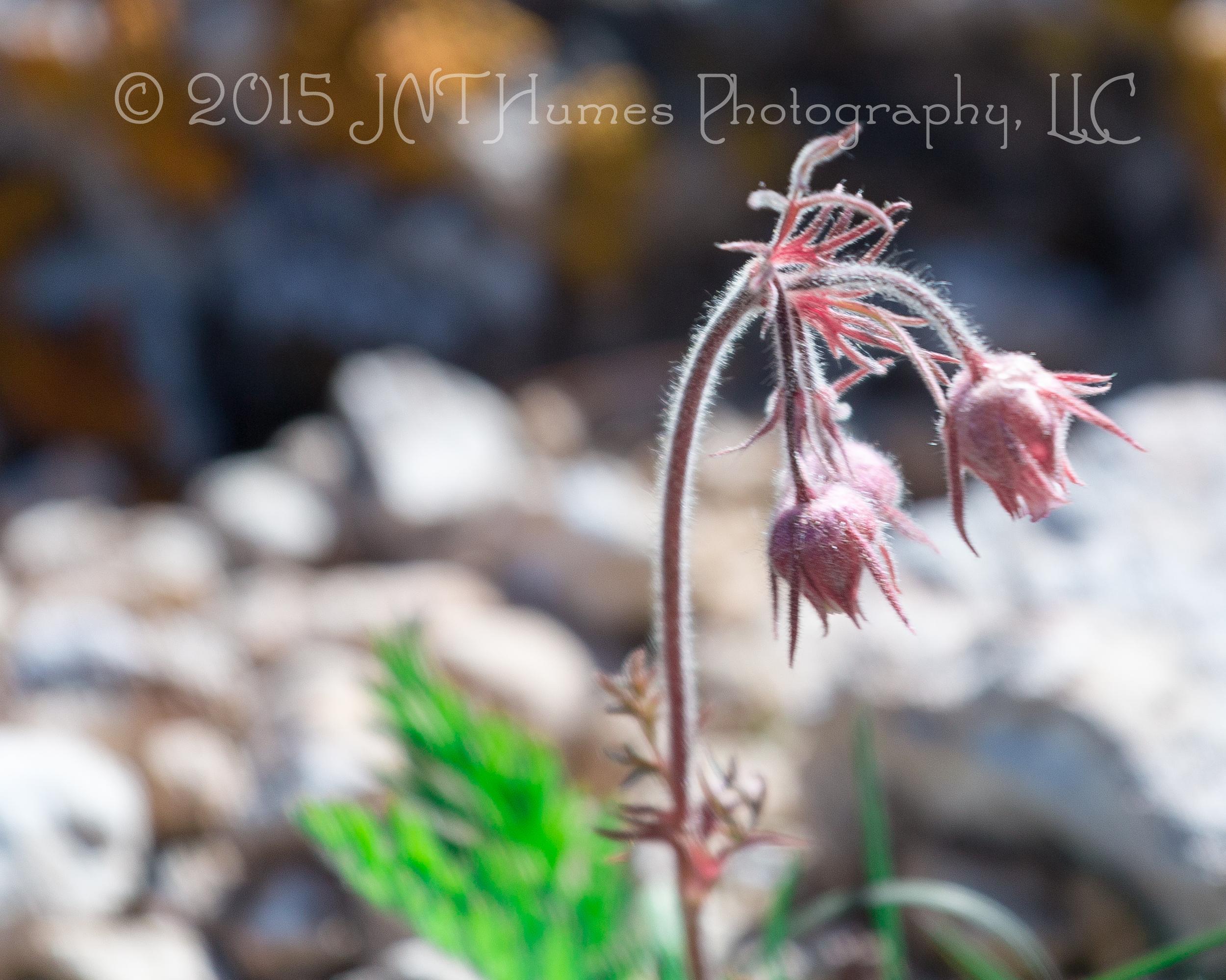 20160604-IMG_2084© 2016 JNT Humes Photography, LLC.jpg
