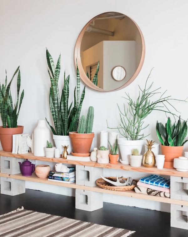house plants care