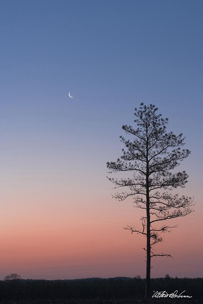 """""""Crescent Moon""""  - (A,E,F)"""
