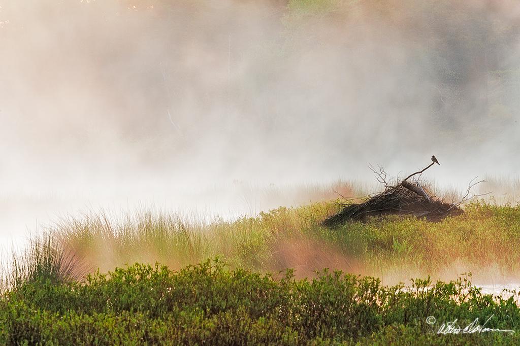 """""""Meadows Morning""""  - (A,E,F)"""