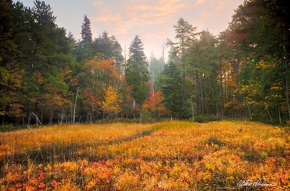 """Fall Meadow""  - (A,E,F)"