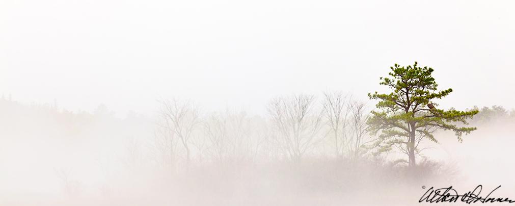 """""""Solo Tree & Eagle""""  - (C)"""