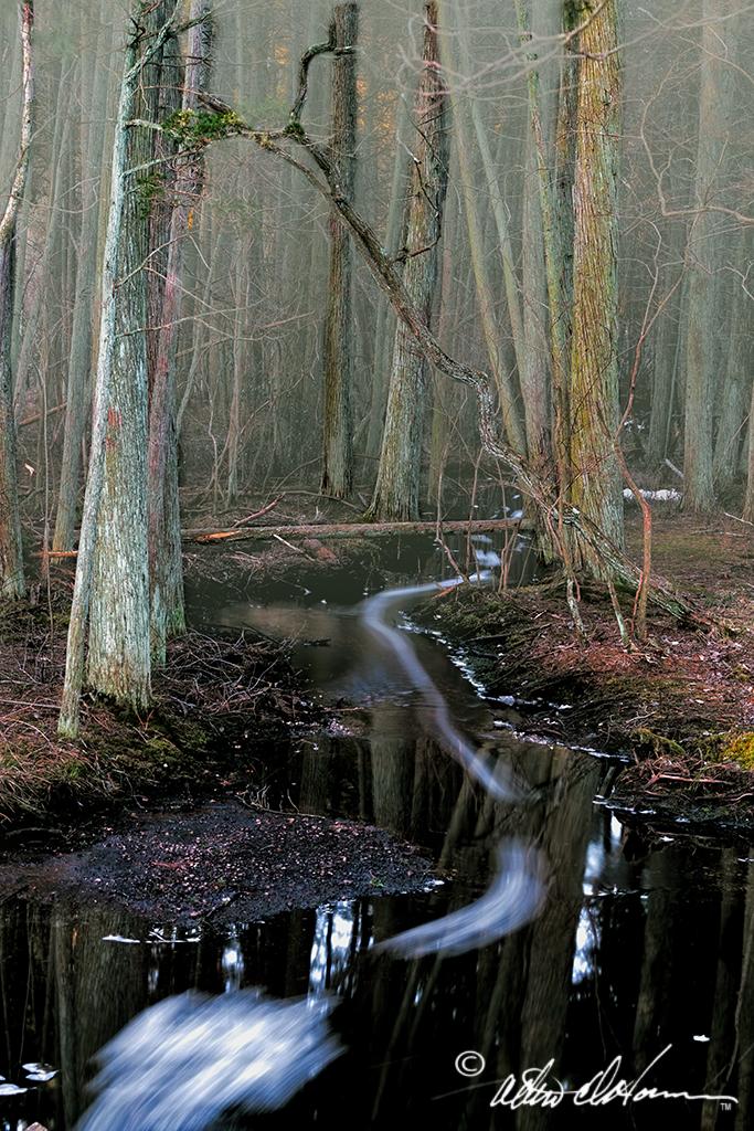 Cedar Swamp Stream (A,E & F)