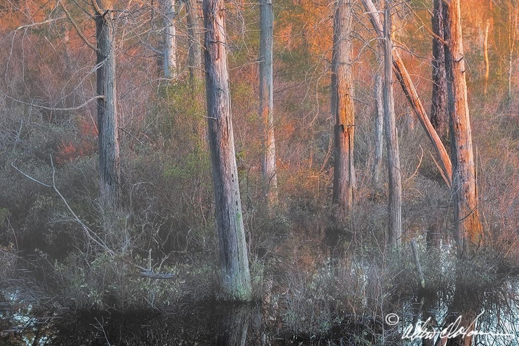 Swamp Light (A, E & F)