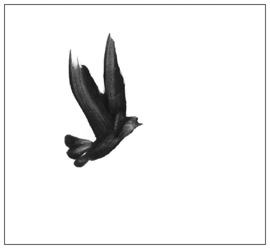 Bird-Sky.jpg
