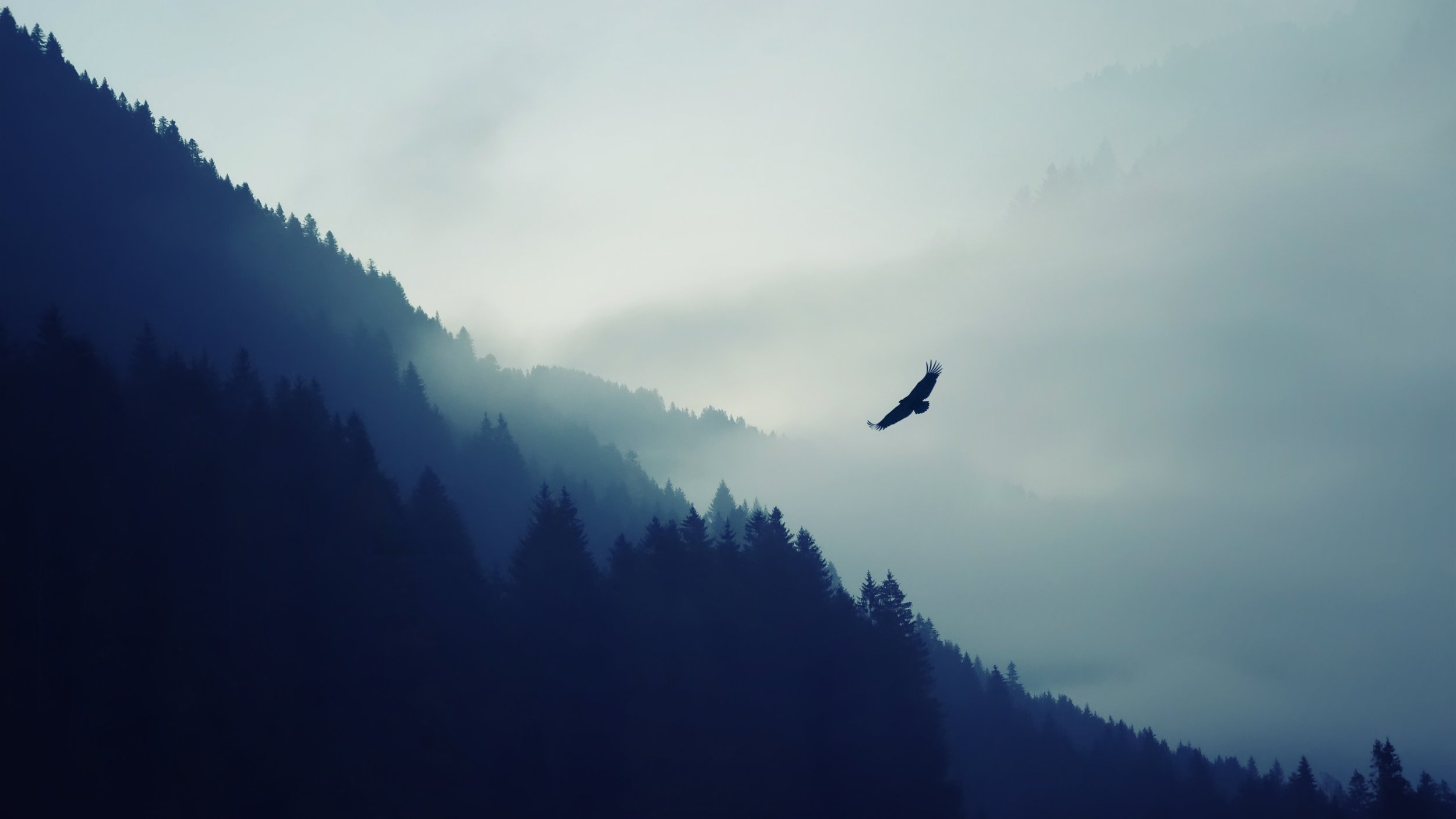 Mountain Forest Fog Valley Eagle.jpg