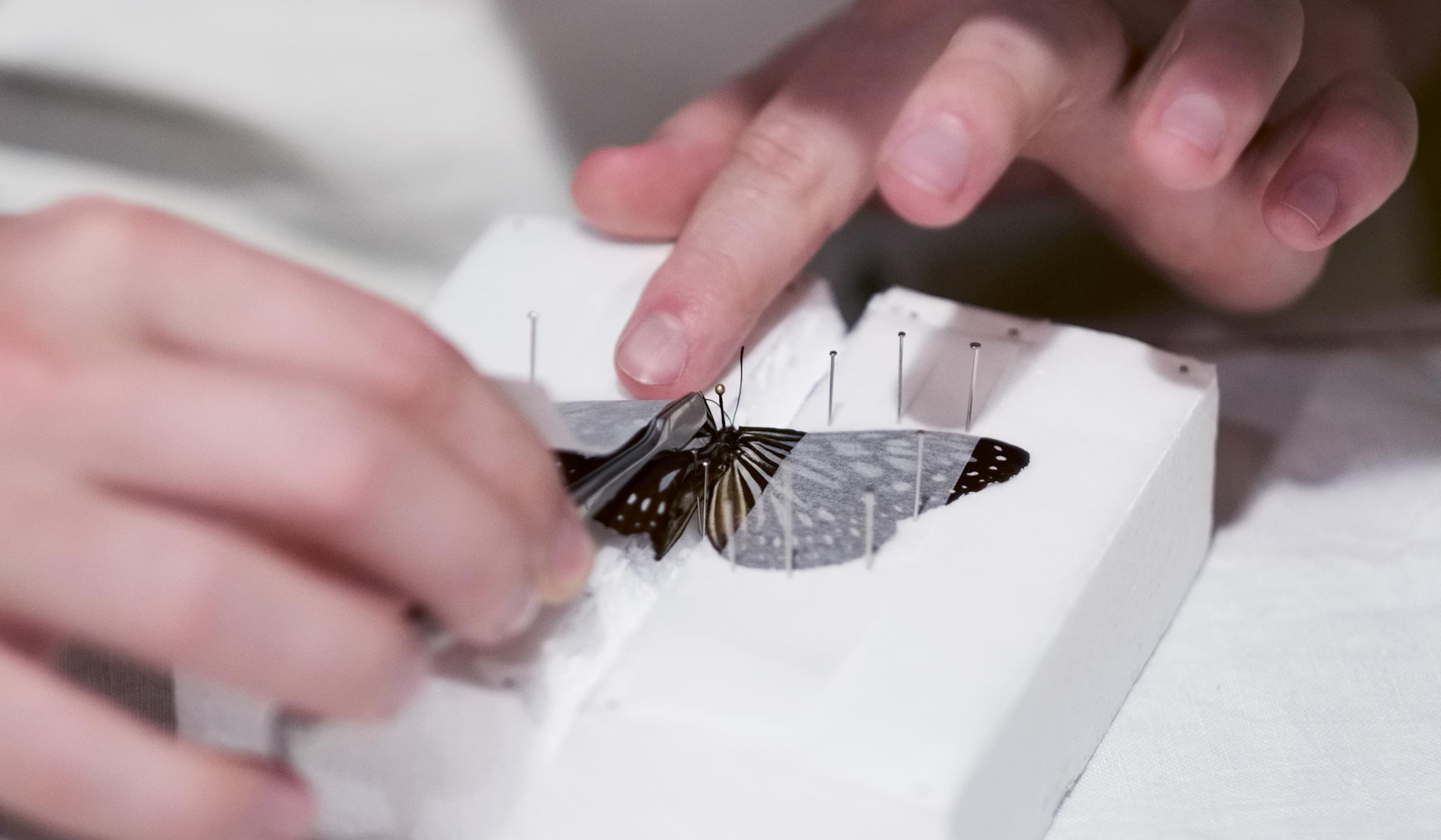 01-rip-butterfly.jpg