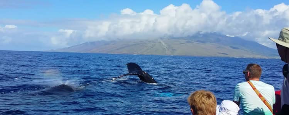 Maui Whale Watching.png