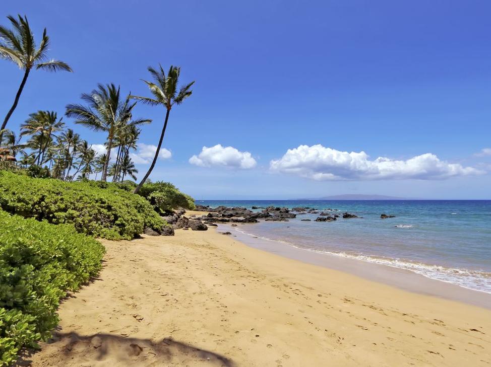 Maui Beach.png