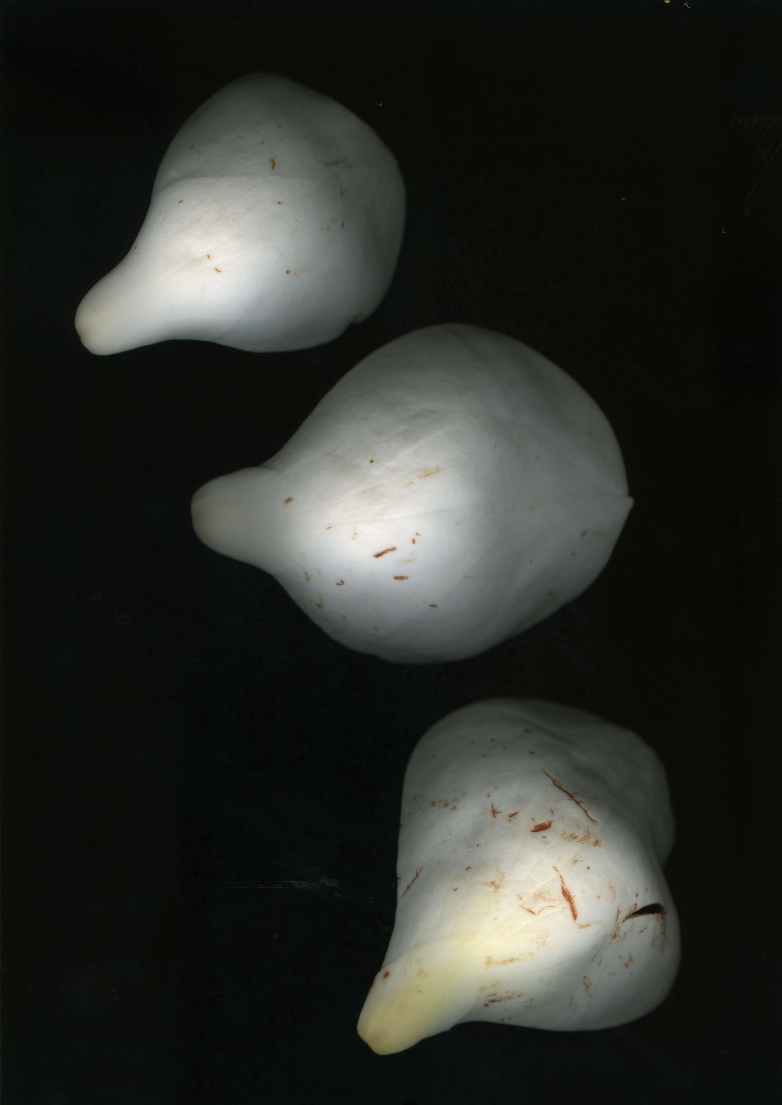 magnolialeafs_1.jpg